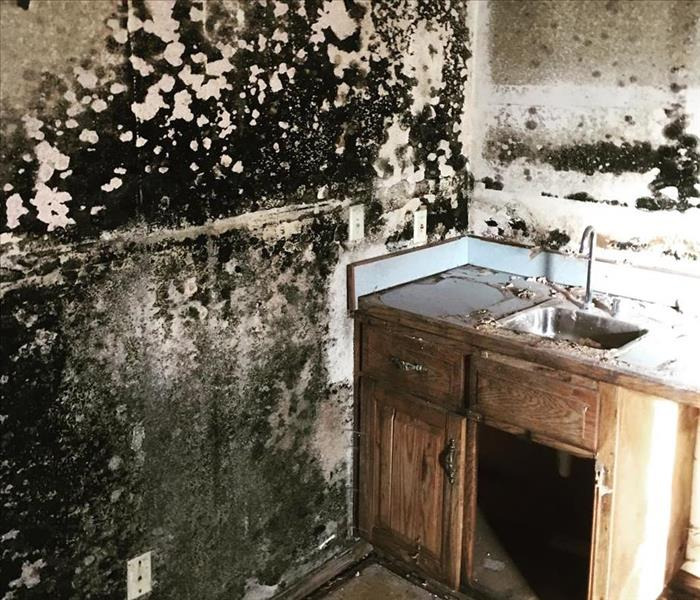 Mold Remediation Conditions in Nixa Might Be Right for Mold