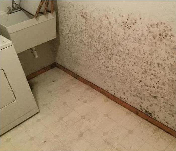 Mold Remediation Nixa Area Residents:  Follow These Mold Safety Tips If You Suspect Mold