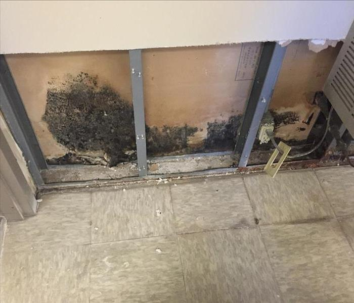 Mold Remediation Prevent Mold Growth in your Branson Area Home